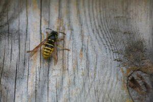 Holz-Schröer - Wespenfraß an der Holzfassade